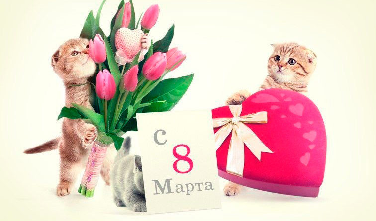 подарок котенка