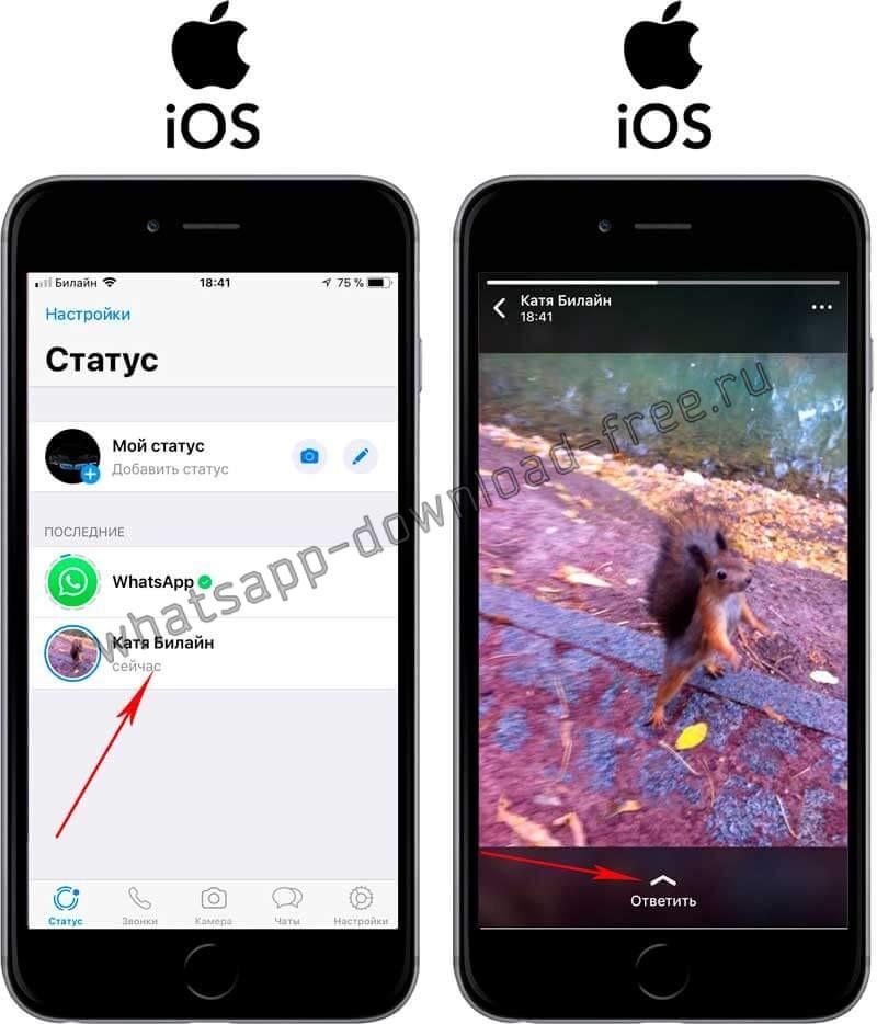 Отправить ответ на статус в WhatsApp на Iphone